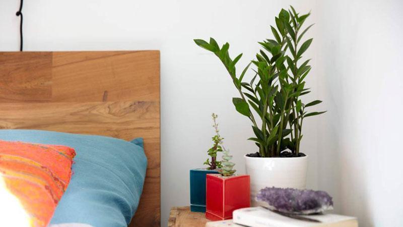 4- تاثیر گل و گیاه در اصول فنگ شویی اتاق خواب